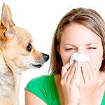 mujer-con-pañuelo-en-la-nariz-por-alergia-junto-a-un-perrito