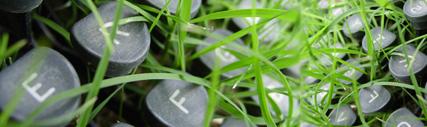 imagen-simbolica-de teclas-de-maquina-de-escribir-mezcladas-con-la-hierba