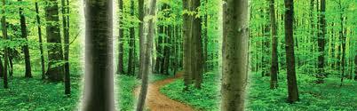camino-que-se-interna-en-un-bosque